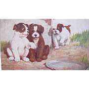 Post Card of Dogs / puppies Artist Signed 1906