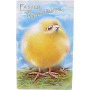 Easter Post Card with Big Chick 1909