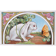 Easter Postcard with White Bunny  Red Eyes and Butterfly