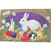 Easter Postcard with Red Eyed Bunnies Printed by Winsch
