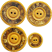 3 Large 1 Small Celluloid Buttons Scored Flowers 1915
