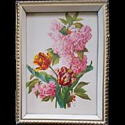 Vintage 1940s Botanical Lithograph Print Tulips E. A. Seguy