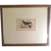 Beautifully Framed Hand-Colored Engraving of Hummingbird