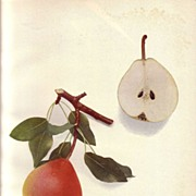Lovely Fruit Print, 1921, PEARS OF NY Worden Seckel, Hedrick
