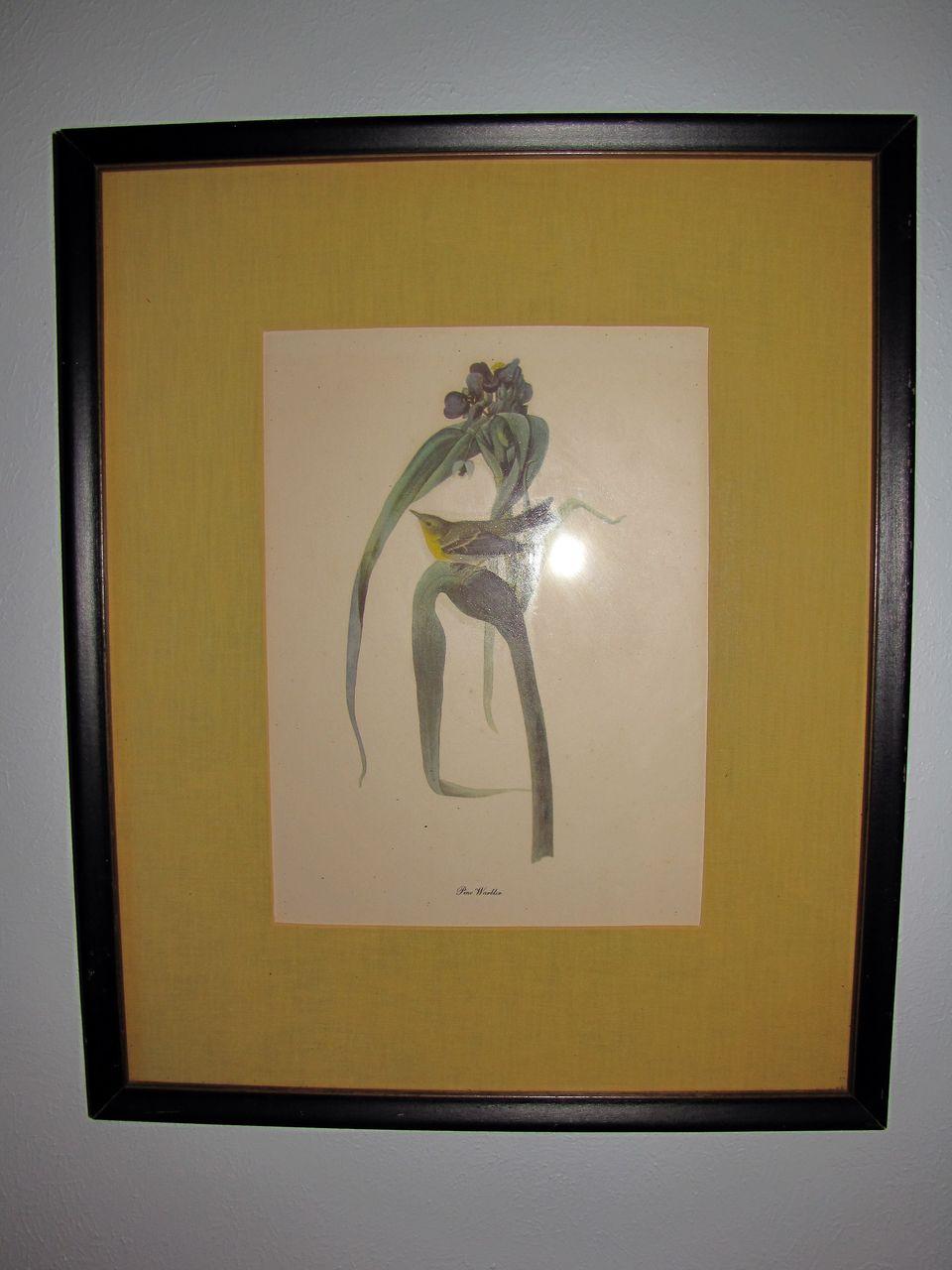 Lovely Framed and Matted Audubon Bird Print, PINE WARBLER