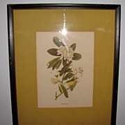 Lovely Framed and Matted Audubon Bird Print, CANADA WARBLER