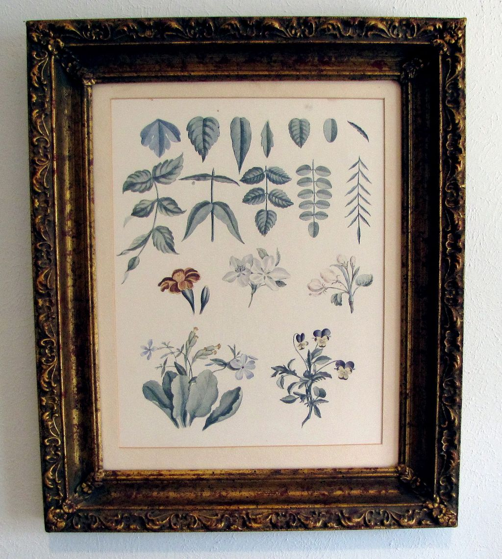 Lovely Framed Botanical Print, Flowers, Violas
