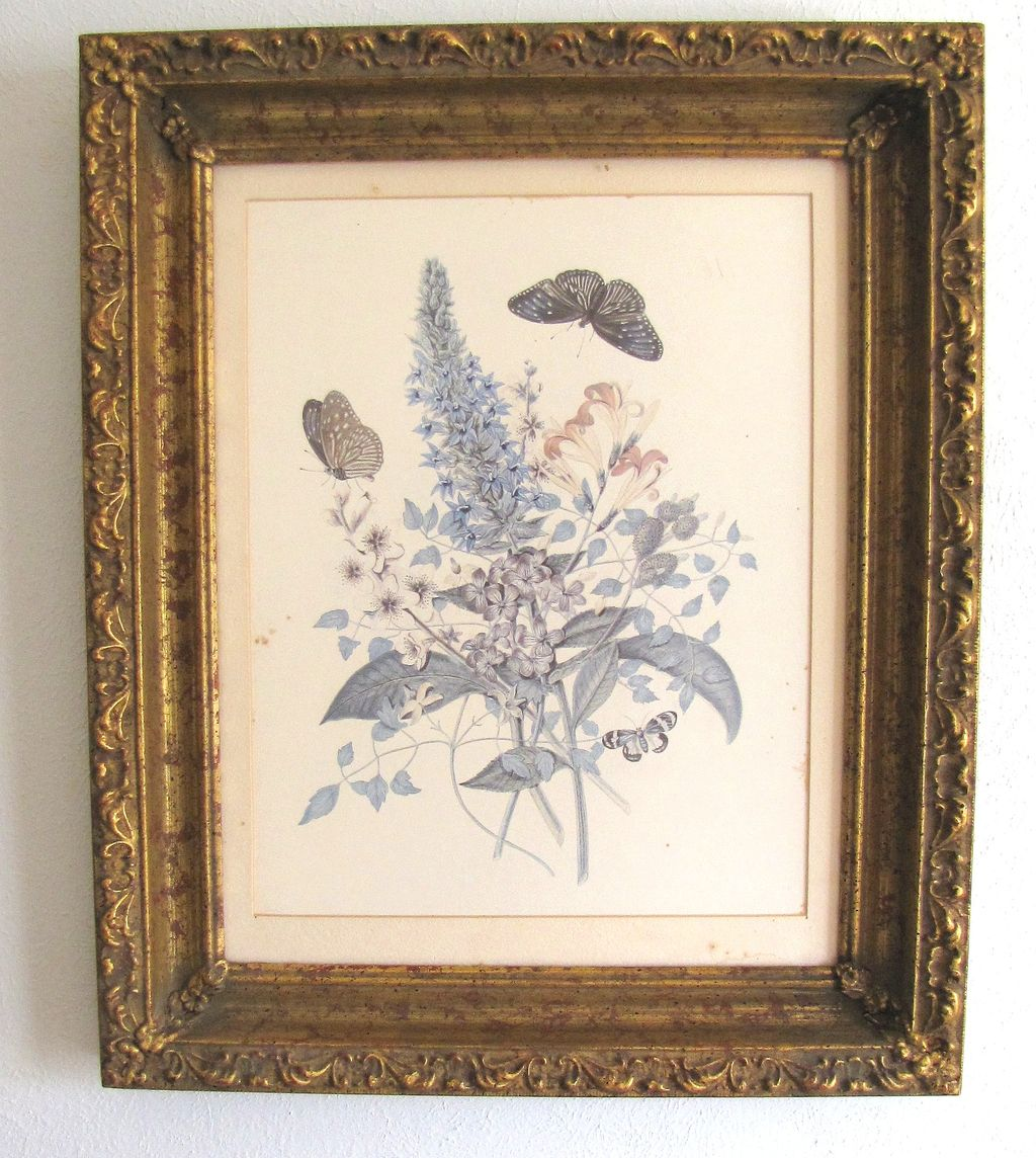 Lovely Framed Botanical Print, Flowers & Butterflies