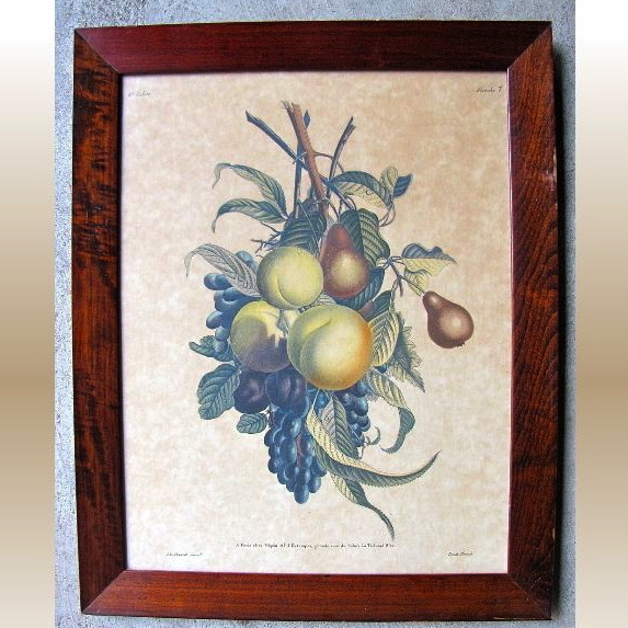Lovely Colored Print of Fruit, J. L. Prevost invenit, Ruotte Direxil