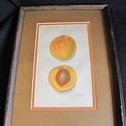 1913 Print of a LIZZIE PEACH, Framed, Matted Under Glass