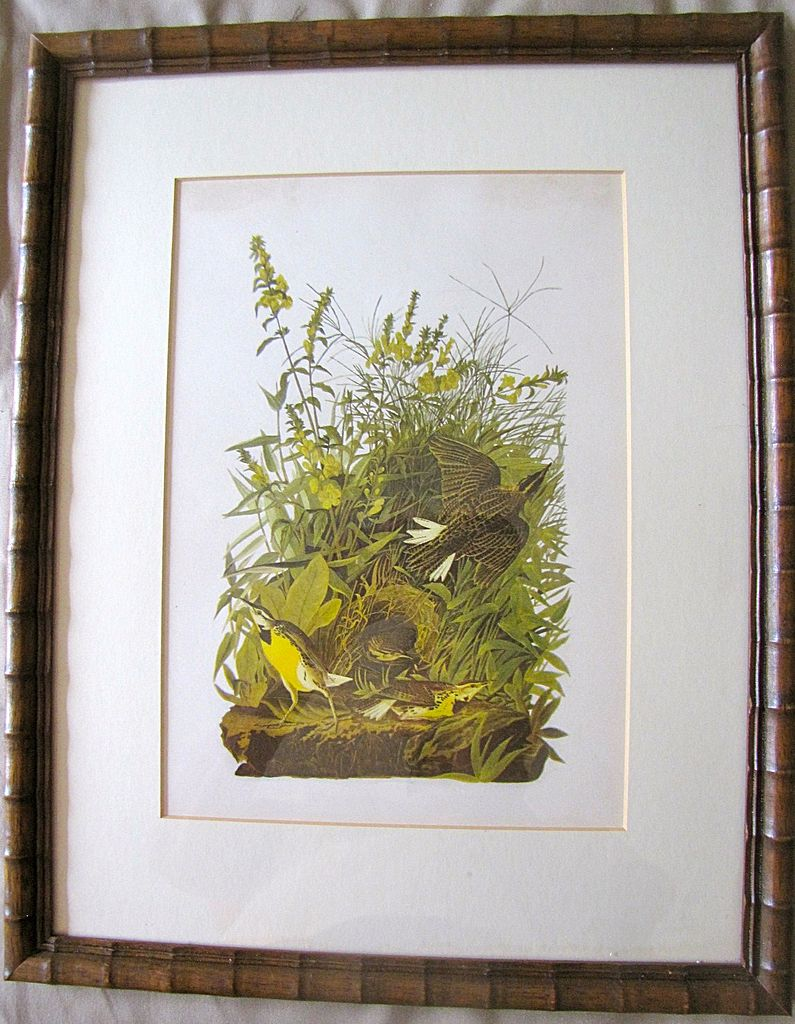 Lovely Framed Audubon Print, MEADOW LARK
