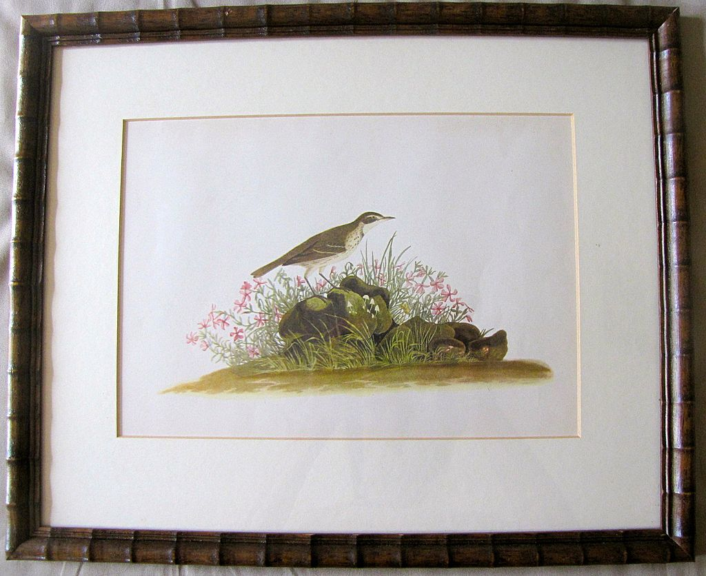 Lovely Framed Audubon Print Sandpiper From Tomjudy On