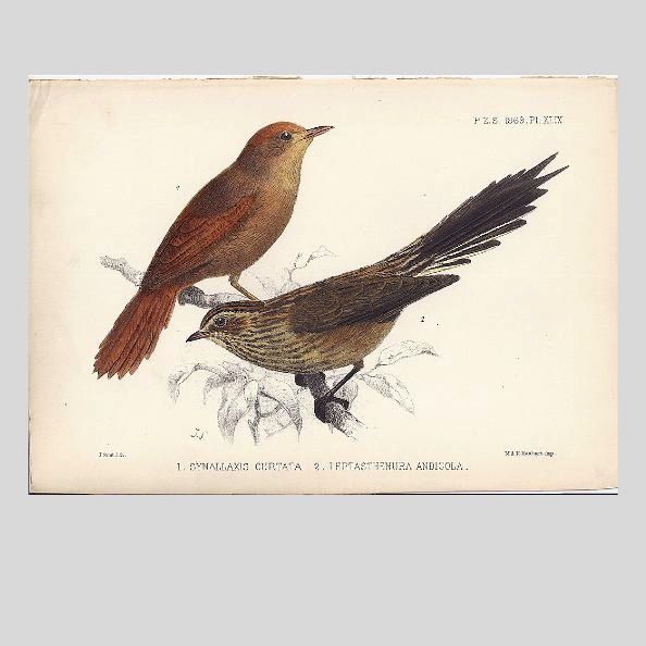 1869 Joseph Smit Hand-Finished Chromolithograph from PZS, Birds