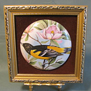 Lovely Vintage Staffordshire Pottery Round Plaque Framed, Baltimore Oriole