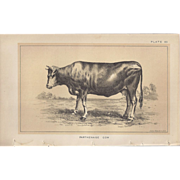 Bi-Color Lithograph PARTHENAISE COW c. 1888 Julius Bien