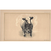 Bi-Color Lithograph Shorthorn Heifer LADY VIOLET c. 1888 Julius Bien