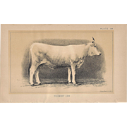Bi-Color Lithograph PIEDMONT COW c. 1888 Julius Bien