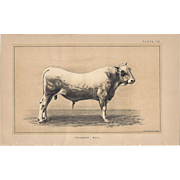 Bi-Color Lithograph Bavarian Prize BULL c. 1888 Julius Bien