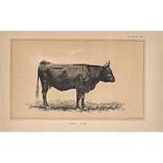 Bi-Color Lithograph HARZ COW c. 1888 Julius Bien