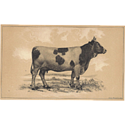 Bi-Color Lithograph C. 1888 Julius Bien COW, MESSKIRCH BREED (Baden)