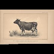 Bi-Color Lithograph C. 1888 Julius Bien LADY EMILY FOLEY 2nd