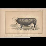 Bi-Color Lithograph C. 1888 Julius Bien FISHERMAN