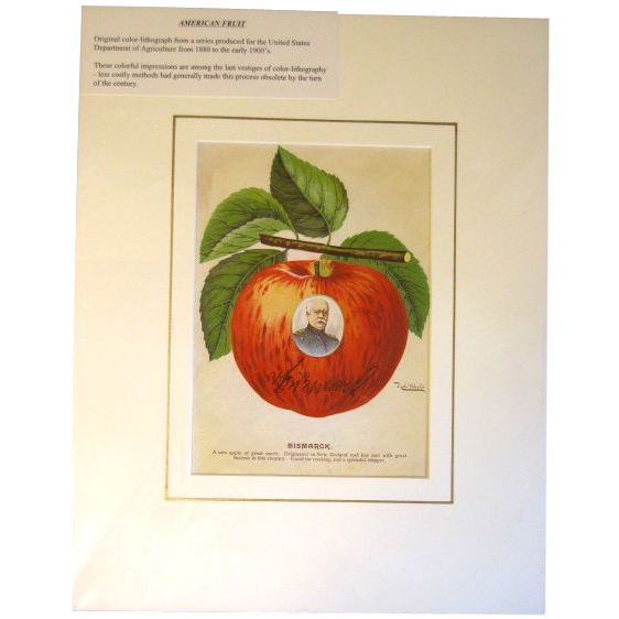 Original Color Lithograph U.S. Department Of Agriculture BISMARCK APPLE
