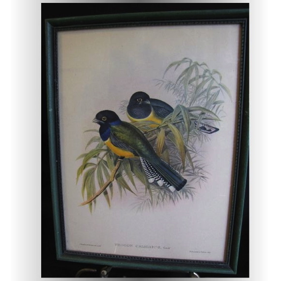 Decorative Vintage Framed Bird Print, TROGON CALIGATUS, Gould
