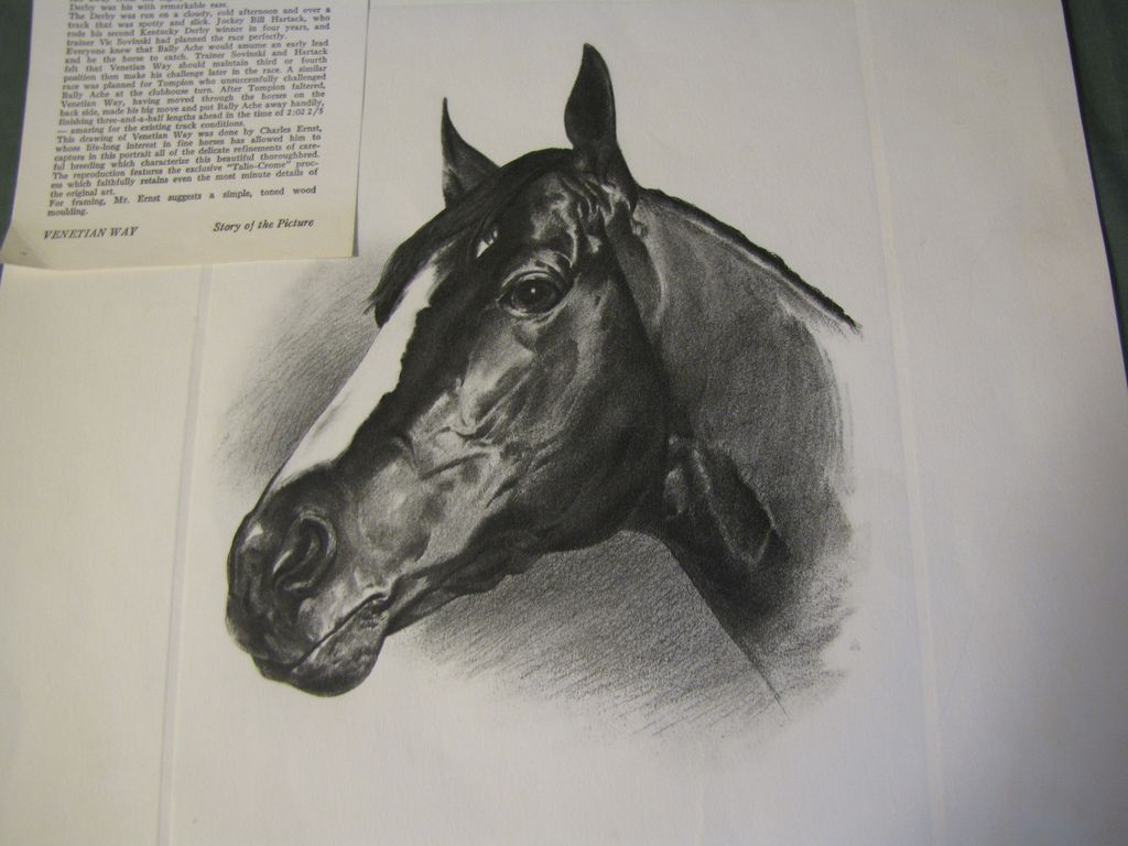 Print of C.W. Ernst Drawing of VENETIAN WAY 1960 Kentucky Derby Winner