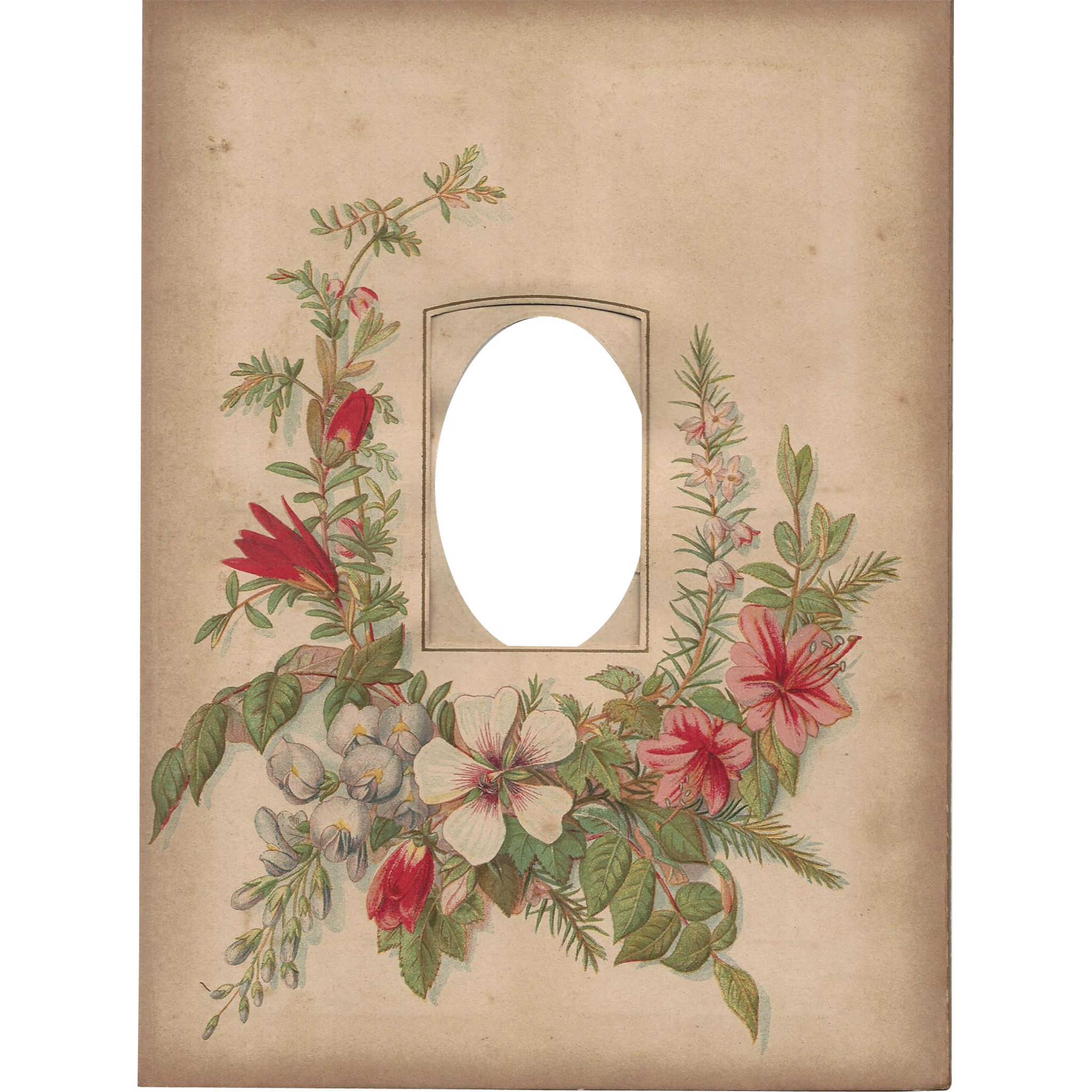 Floral Page From Victorian Photo Album Cdv Opening From