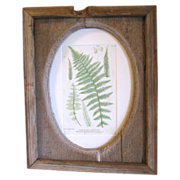 Rustic Folk Art Barn-wood Frame with British Fern Print