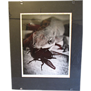 Art Photograph by Otha Spencer, Macro Lizard & Spider