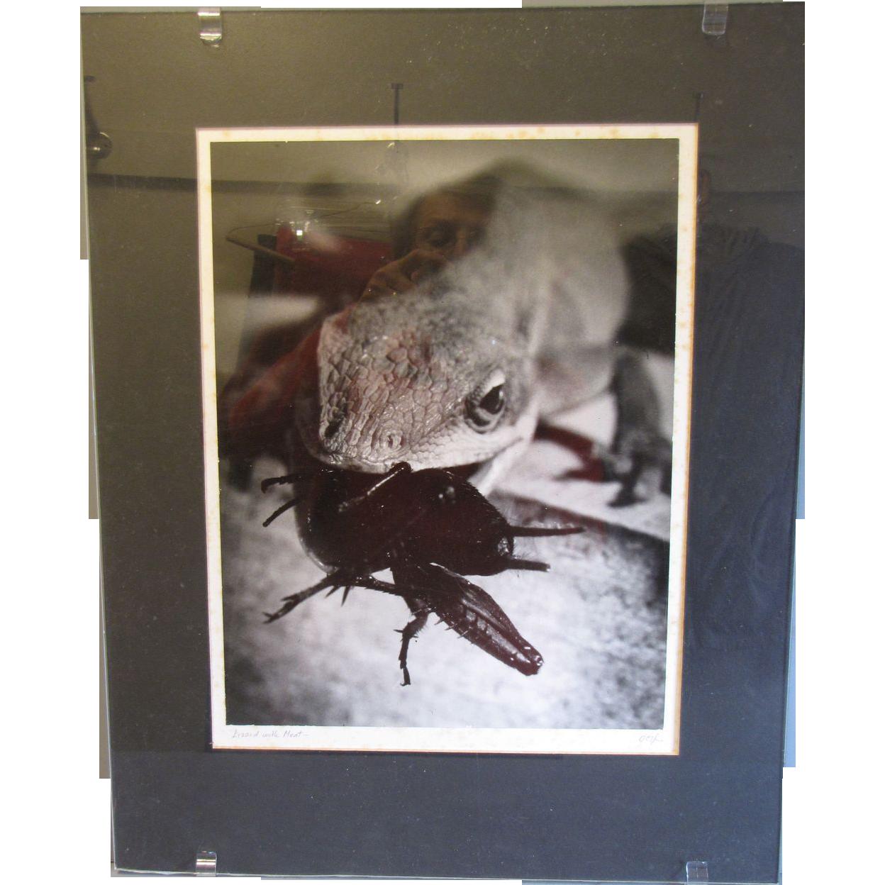 Art Photograph by Otha Spencer, Macro Lizard & Spider