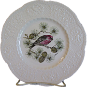 "Lovely 9"" Royal Cauldon Bird Plate, PINE GROSBEAK"
