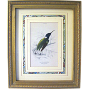 Antique Lizars Hand Colored Engraving of Hummingbird, Framed