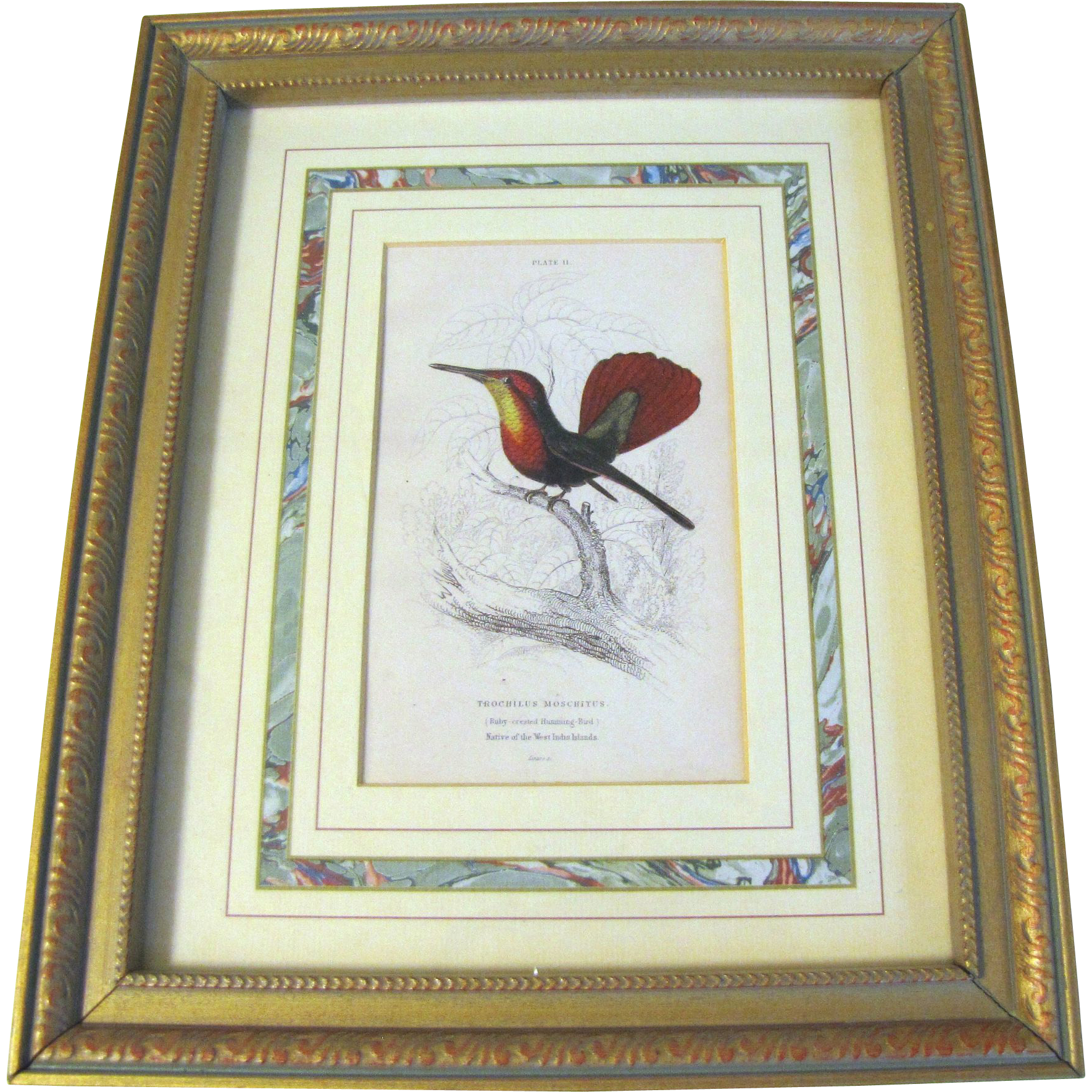 Framed and Matted Hand-Colored Engraving of Hummingbird Lizars