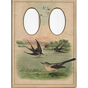 Colorful Page from Victorian Photograph Album, Birds