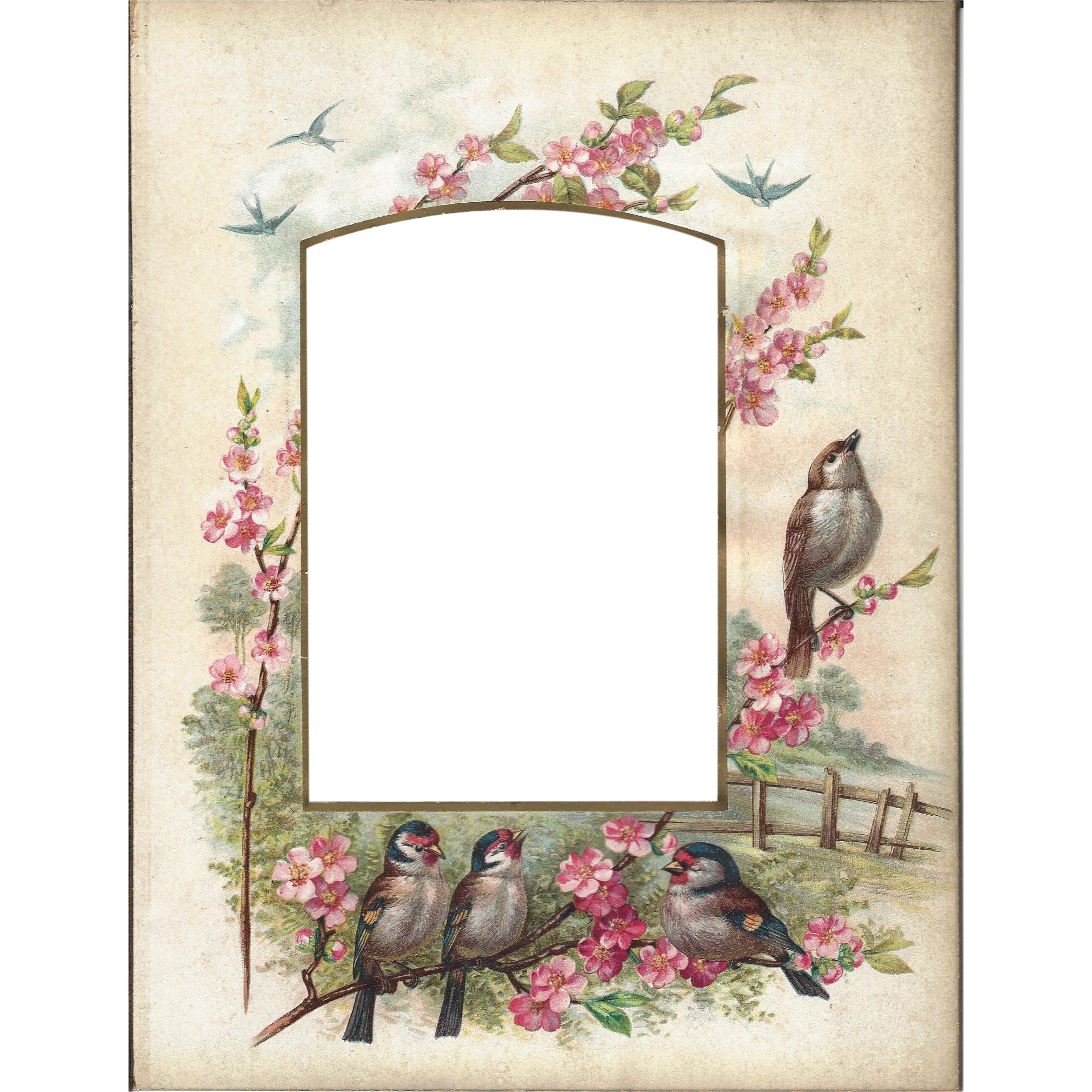 Lovely Colored Page from Victorian Photograph Album, Birds & Flowers