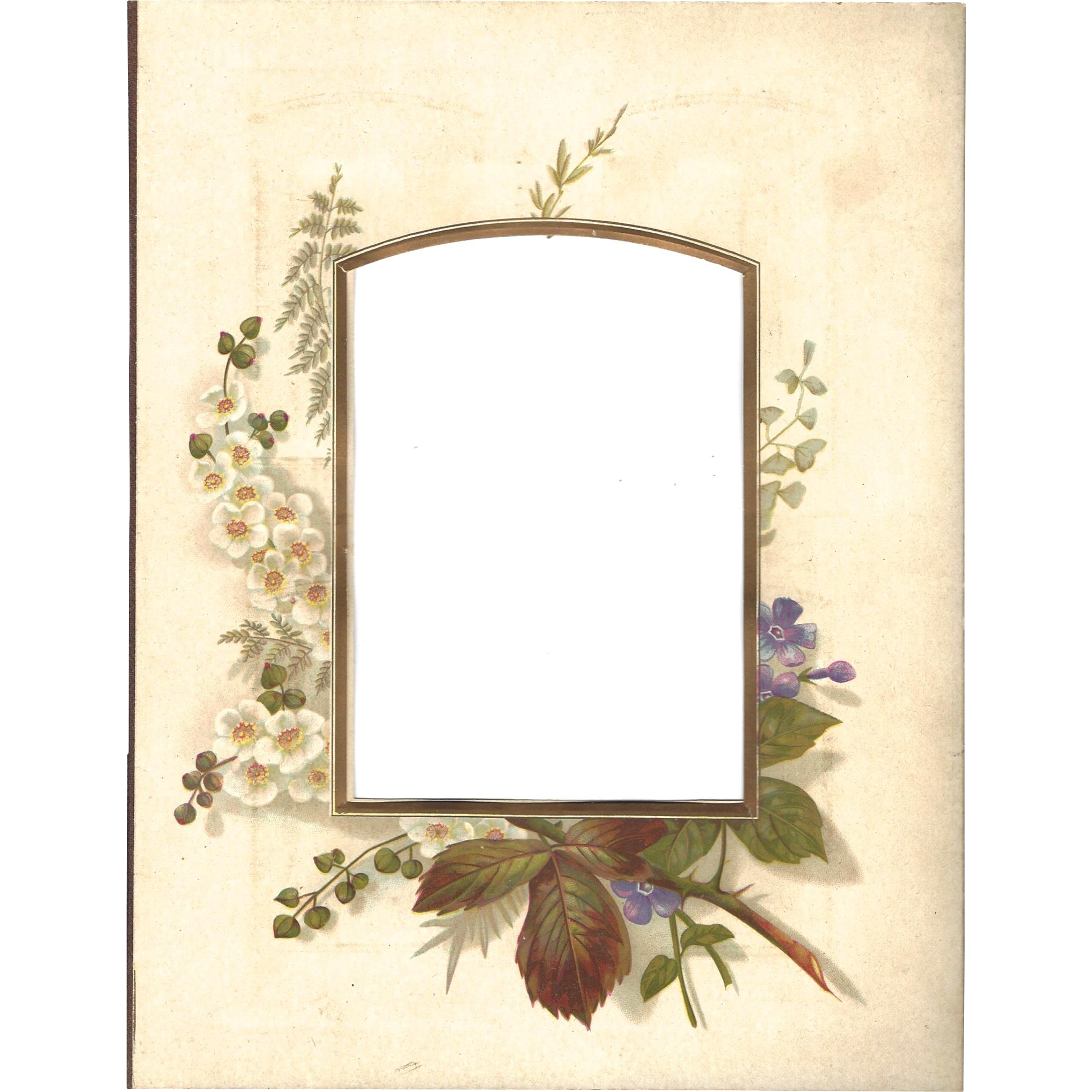 Floral Page from Victorian Photo Album, Wild Roses