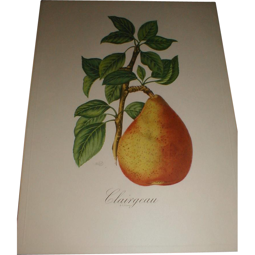 Portfolio Paris Etching Society FRUITS S. Z. Lucas Peaches and Pears