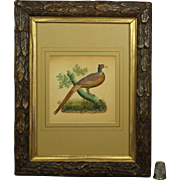 19th Century English Watercolor Embossed Paper Pheasant Bird By Dobbs of London Georgian Circa 1830 Stunning Frame