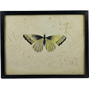 Antique Georgian Cut Paper Picture with Watercolor Moth Monogrammed and Dated 1833