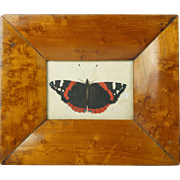 Antique Early 19th Century Miniature Watercolor Painting Butterfly Birds Eye Maple Frame Circa 1830 Georgian