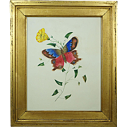 English 19th Century Watercolor Painting Butterfly Lemon Gilt Frame Circa 1830 Georgian