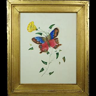 English 19th Century Watercolor Painting Butterfly Lemon Gilt Frame Circa 1830 Georgian