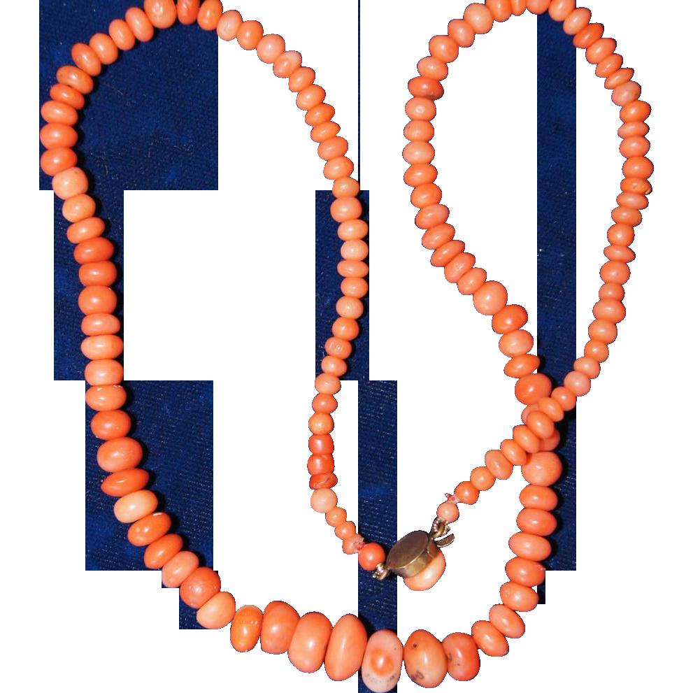 Resultado de imagen para corales sciaca