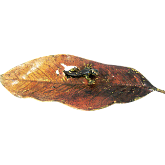 Vienna Bronze Lizard Leaf  -  Pen Tray – c 1900