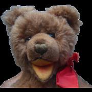 1960s Cosy Steiff Teddy Bear with Label