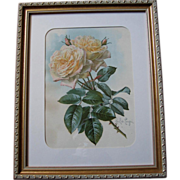 c1898 Paul de Longpre Roses Print Chromolithograph Autographed by Book Author