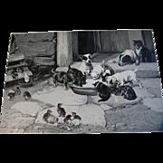 c1892 Five O Clock Tea Print Dog Cat Chicken Duck W H Trood Farm Animal Engraving Fancy Gesso Frame